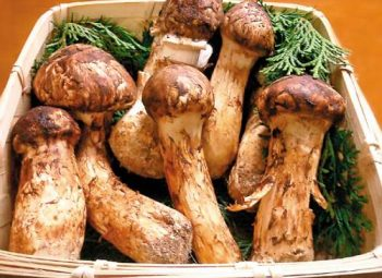 Masutake Mushroom Festival